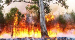 اندلاع الحرائق بجندوبة: التحقيق يثبت تورّط 6 أشخاص